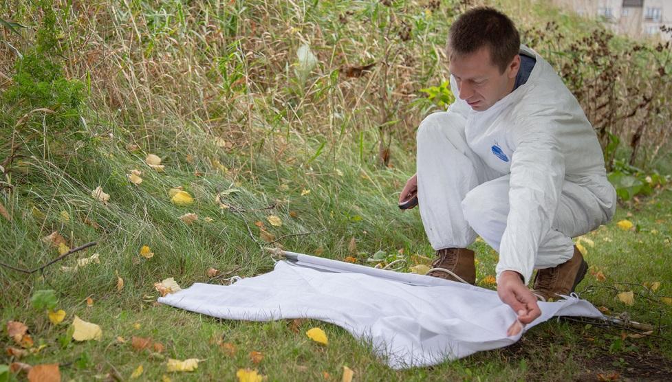Homme cherchant des tiques sur la pelouse