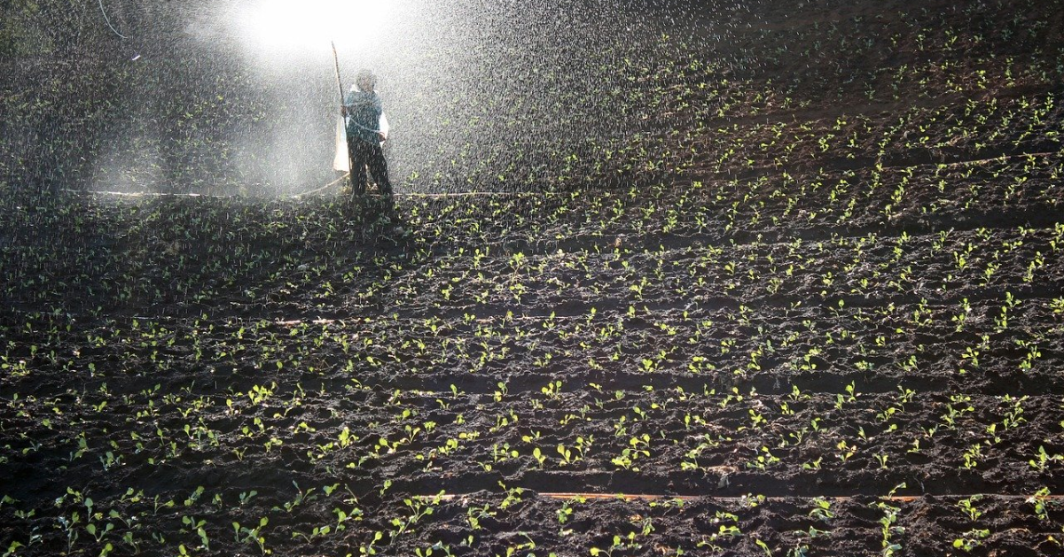 A person working in a field