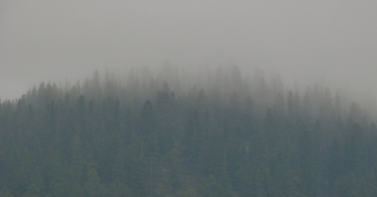 Thick smoke in a forest area