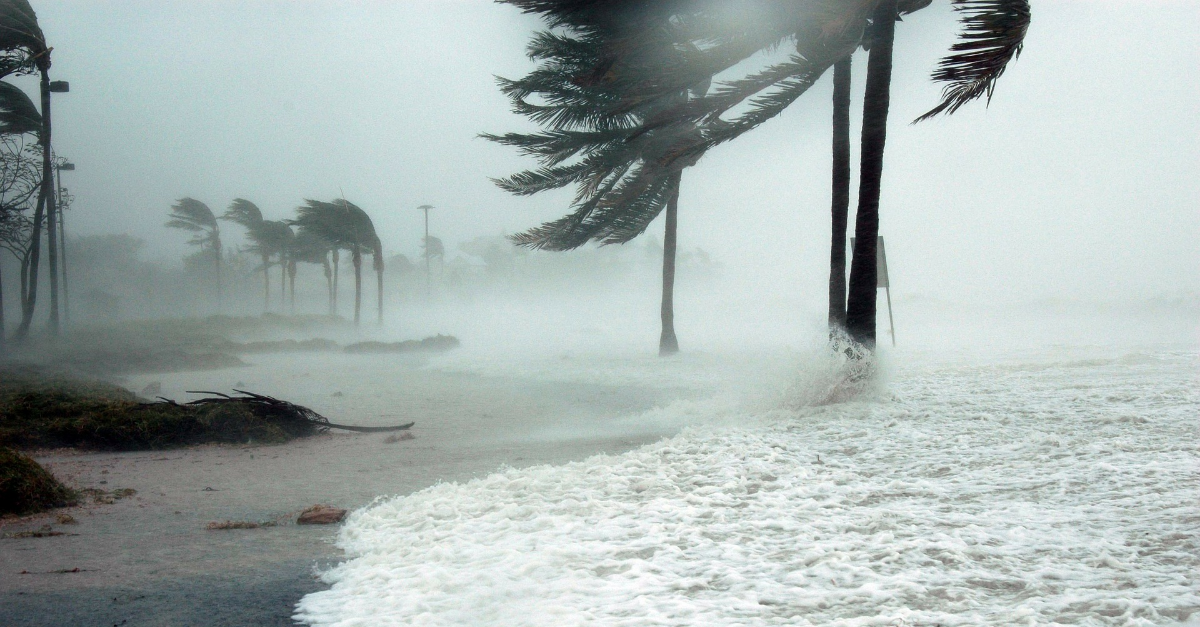 Palm trees bent by hurricane wind.