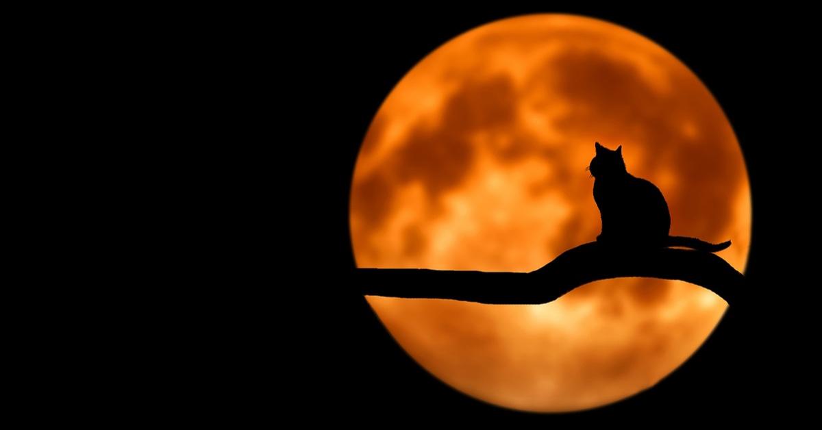 Un chat devant la pleine lune.