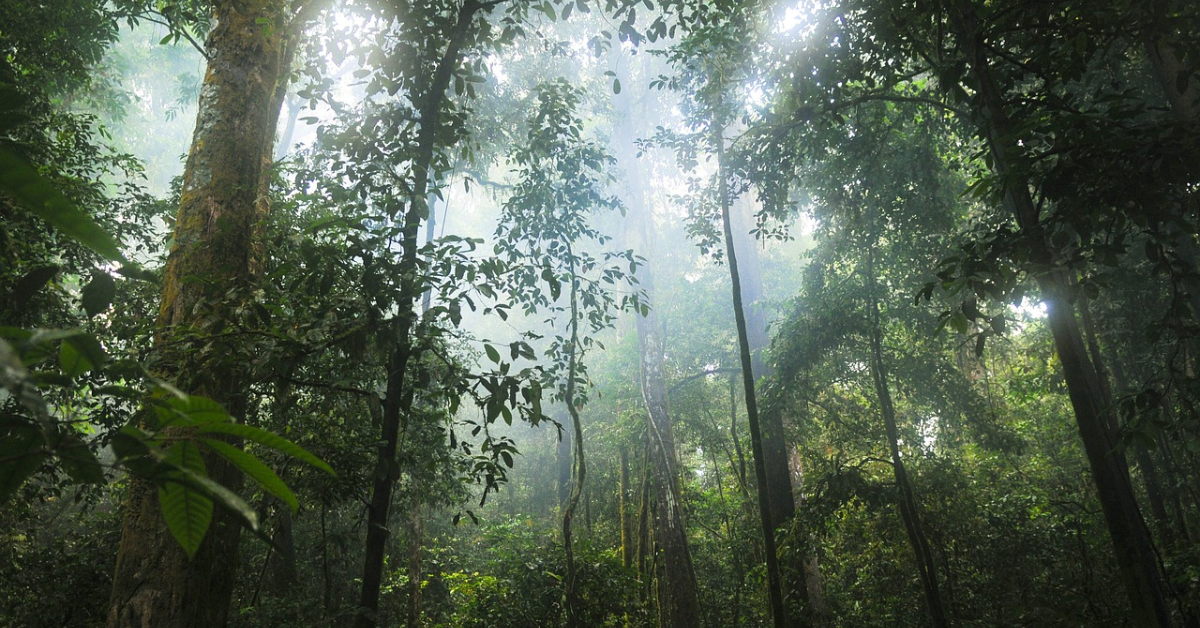 Le soleil brillant à travers les arbres dans une dense forêt tropicale.