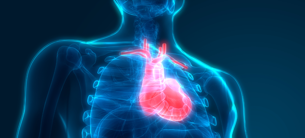 Illustration of the human heart inside a body