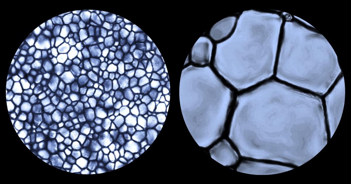 La croissance de cristaux de glace à l'échelle microscopique