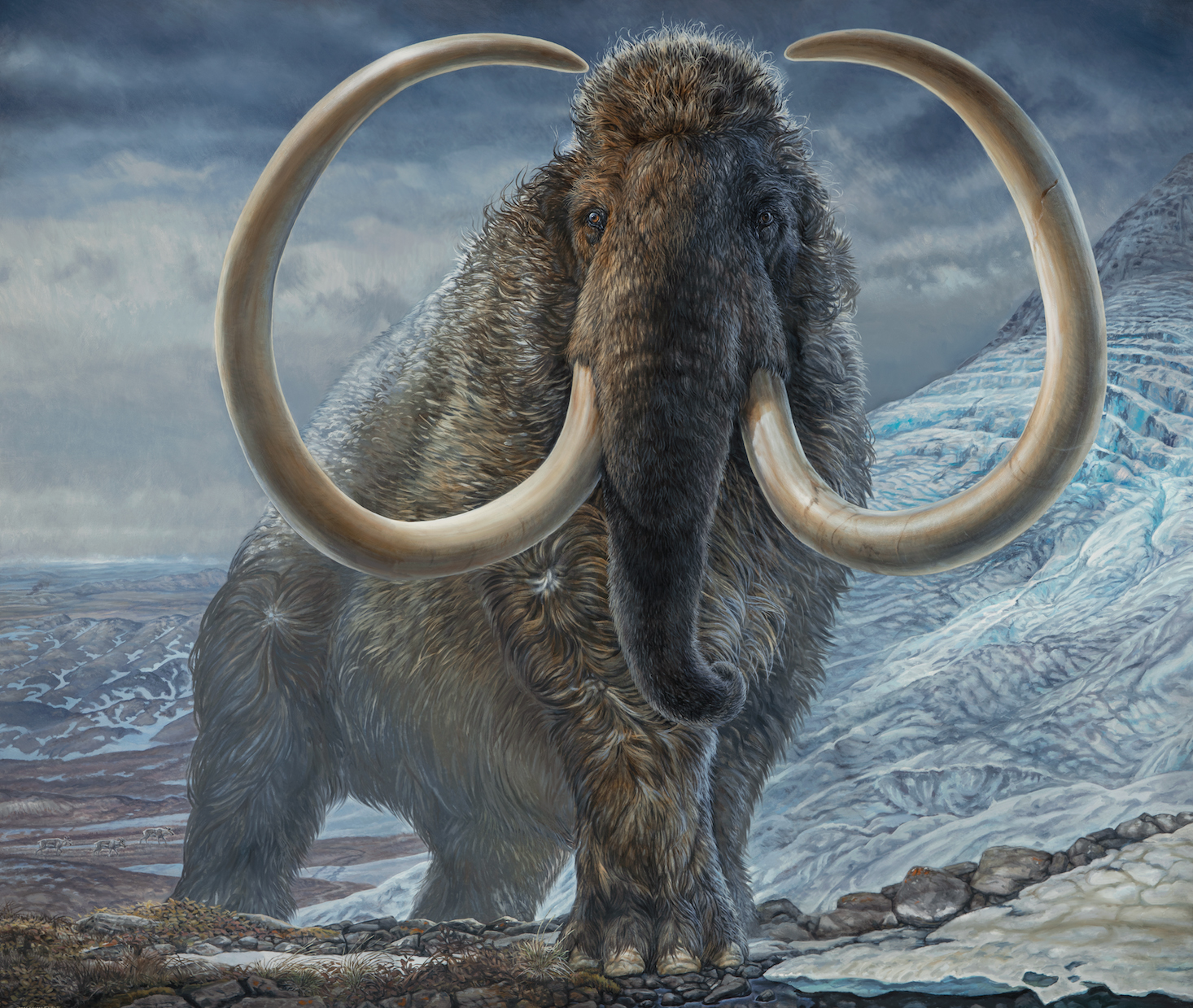 Rendu du mammouth laineux