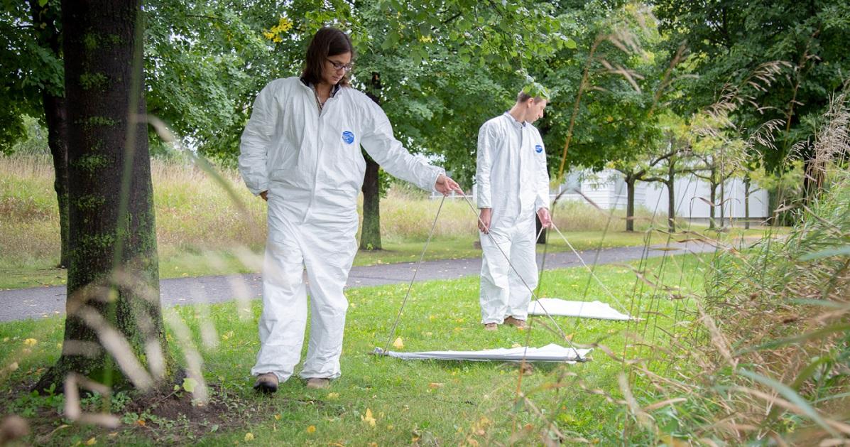 Des chercheurs uOttawa cherchent des tiques sur la pelouse